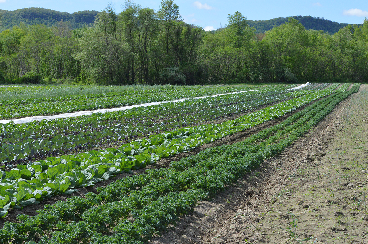 First Food Bank Farm, Hadley MA